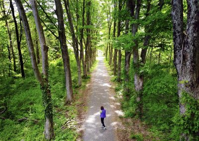 A hiker stands alone in an alley of trees, on a bicycle greenway